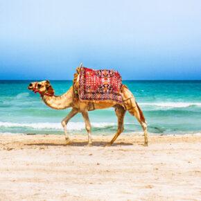 Krass: 7 Tage Tunesien mit 4* All Inclusive Hotel, Flug, Transfer & Zug nur 182€