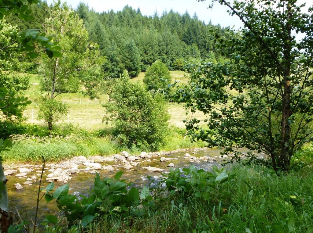 Wald mit Fluss - Wanderurlaub