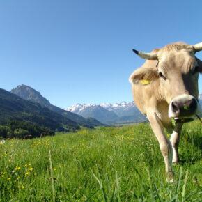 Kurzurlaub in den Alpen für nur 35 € p.P. im sehr guten Hotel mit vielen Extras