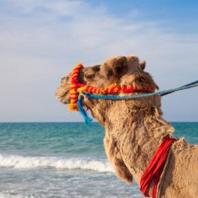 Juni: 7 Tage Djerba, gutes Hotel, All Inclusive und Flug nur 302 €