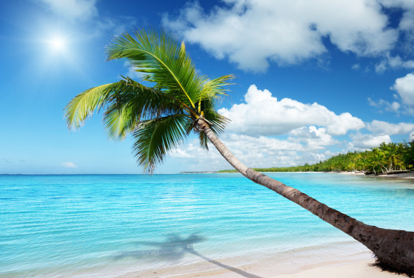 Karibik Traumstrand mit Palme