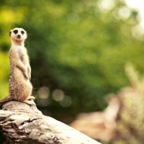Leipziger Zoo: 3 Tage im 4* Hotel mit Zoo-Eintritt ab 69€
