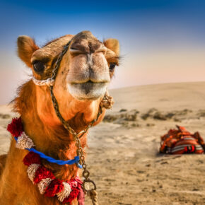 Lastminute Ägypten: 1 Woche All Inclusive mit 4* Hotel, Flug & Transfer nur 324 €