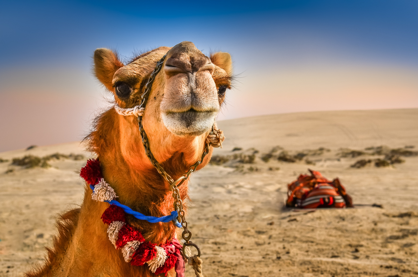 196gypten 1 woche all inclusive im 4 hotel albatros nur 324