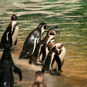 Kölner Zoo Gutschein nur 10,90 € am Tag - ganze 44 % sparen