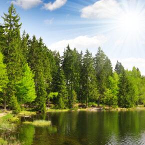 Bayerischer Wald: 4 Tage Kurzurlaub mit All Inclusive & Wellness ab 99€