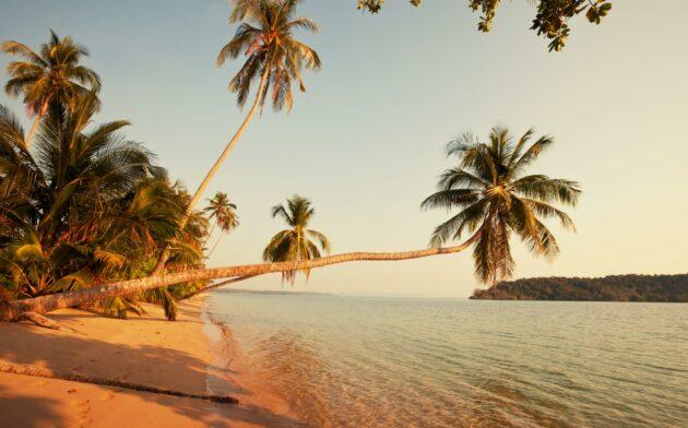 Thailand Strand Palmen