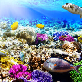 7 Tage Hurghada in der 5* Juniorsuite mit All Inclusive, Flug & Transfer nur 266€