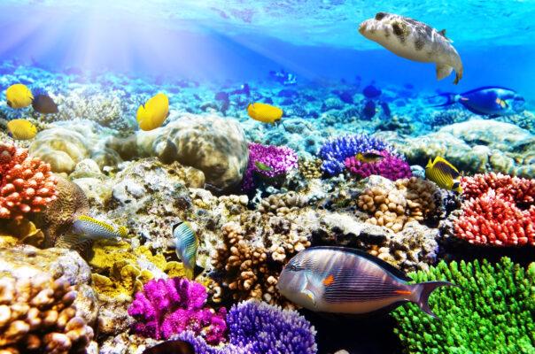 Ägypten Unterwasserwelt Hurghada