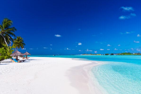 Palmen an Lagune auf Malediven