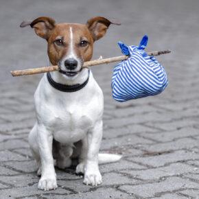 Urlaub mit Hund – die besten Tipps & Angebote