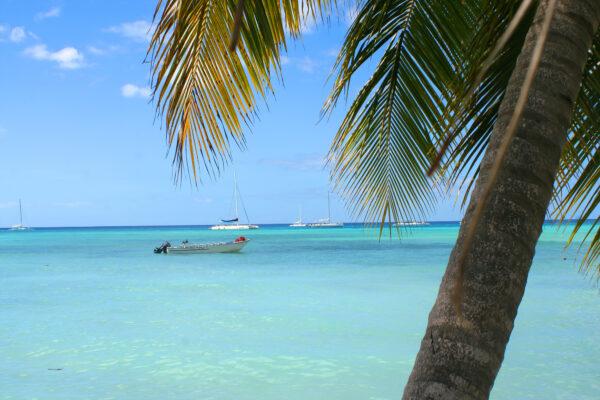 Bavaro Strand Punta Cana mit Palme