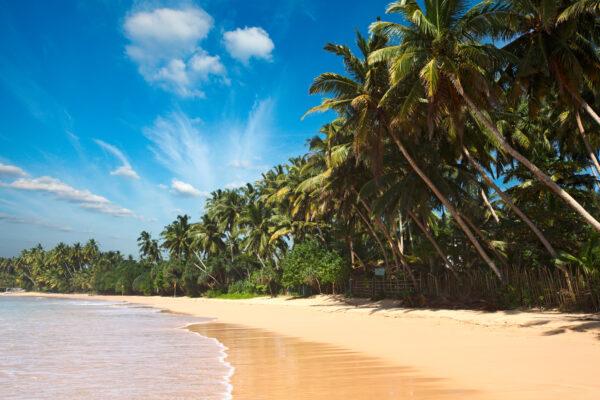 Tropischer Strand Sri Lanka