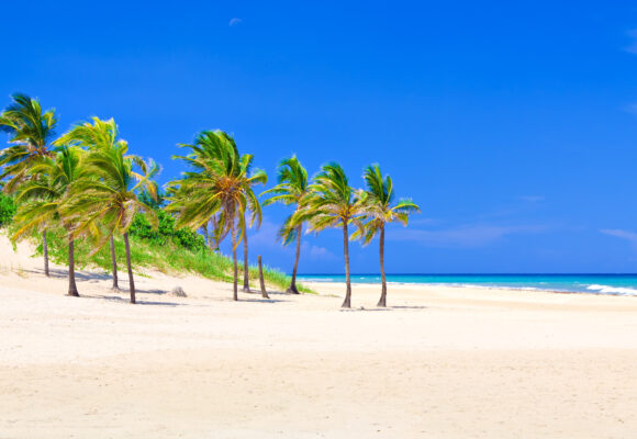 Varadero Strand auf Kuba mit Palmen