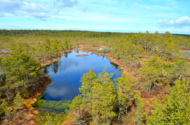Viru Moor in Estland