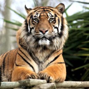 Safaripark Zoo Stukenbrock: Gutschein für den Tageseintritt nur 22,50€