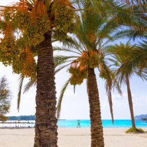 Mallorca im JULI: 4 Tage am Wochenende mit 3* Hotel & Flug für nur 118€