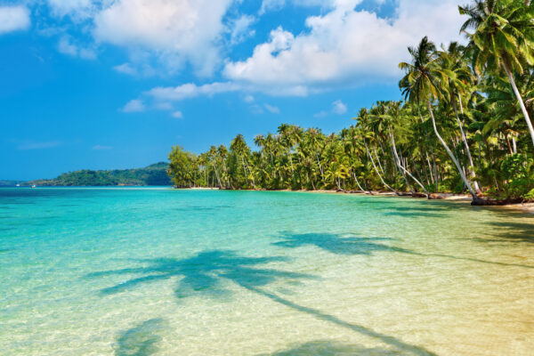 Palmen am Meer auf Mauritius