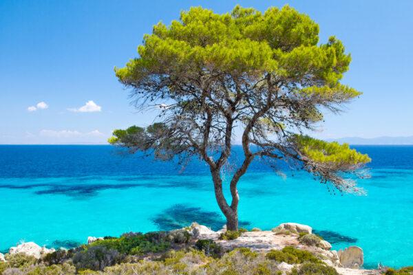 Chalkidiki Blaues Meer