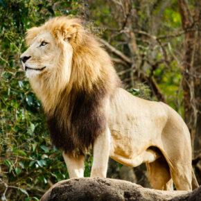 Gutschein Zoo Duisburg: Spare 41 % bei deinem Tagesticket für nur 9,90€