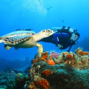 Mexikos Trauminsel: 8 Tage auf Cozumel mit TOP Hotel & Flug nur 406€