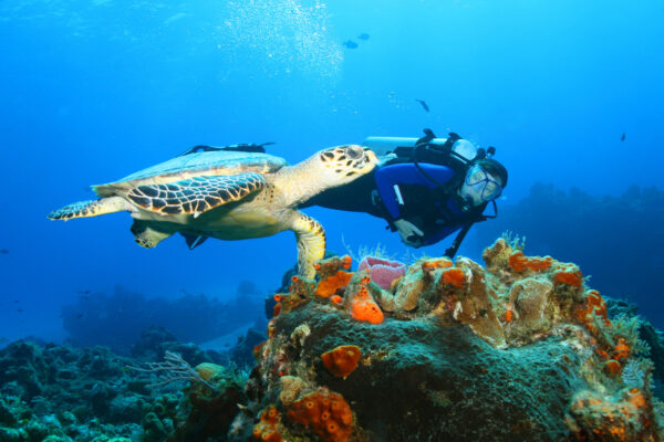 Cozumel Schildkröte