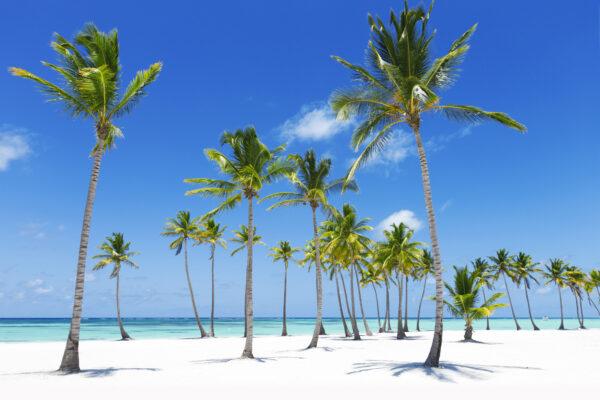 Palmen und klares Wasser am Strand von Jamaika