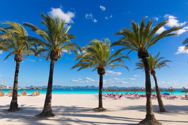 Mallorca Palmen Strand
