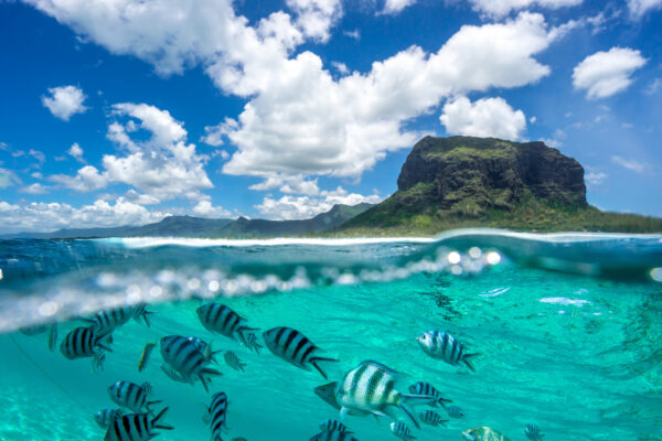 Mauritius Fische