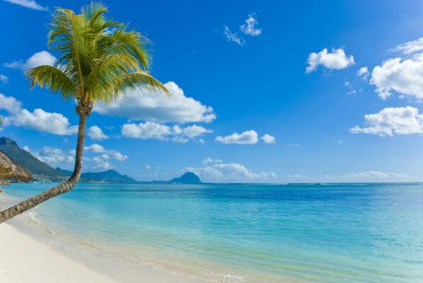 Mauritius Palmen