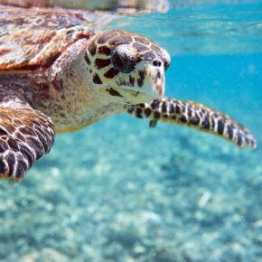 Traumurlaub: 10 Tage Seychellen mit gutem Hotel & Flügen nur 696€