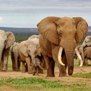 Safari in Südafrika: Direktflüge nach Kapstadt nur 180€