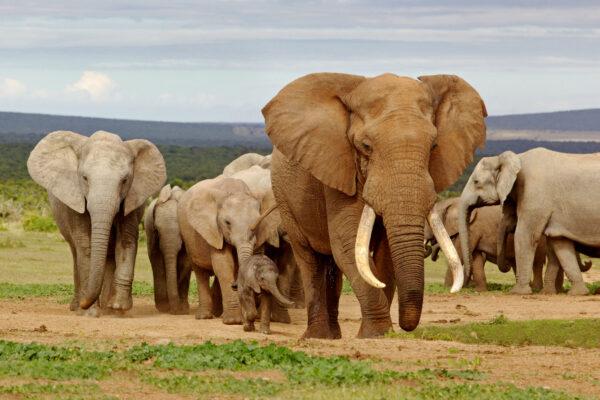 Suedafrika Elefanten
