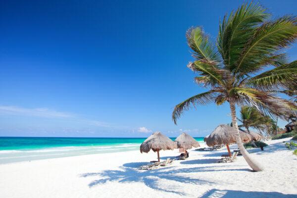 Tulum Strand Palmen