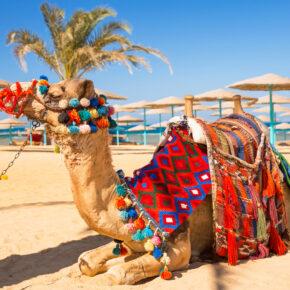 Ägypten: 7 Tage Hurghada im 5* Mövenpick Resort mit All Inclusive, Flug, Transfer & Zug für 479€