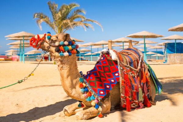 Beste Reisezeit für Ägypten