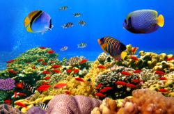 Luxus Urlaub in Ägypten: 7 Tage im TOP 5* All Inclusive Resort mit Flug & Transfer nur 4...