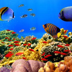 Hurghada Luxus Frühbucher: 7 Tage im TOP 5* All Inclusive Resort mit Flug, Transfer & Zug nur 423€