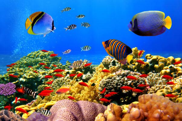 Ägypten Korallenriff