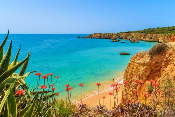 Algarve Blumen Ausblick