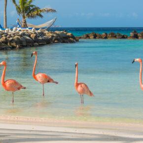 Traumurlaub Karibik: 9 Tage Aruba mit TOP 3.5* Apartment, Flug & Transfer nur 599€