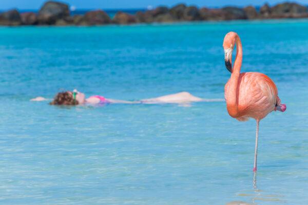 Aruba Flamingo und schwimmende Frau