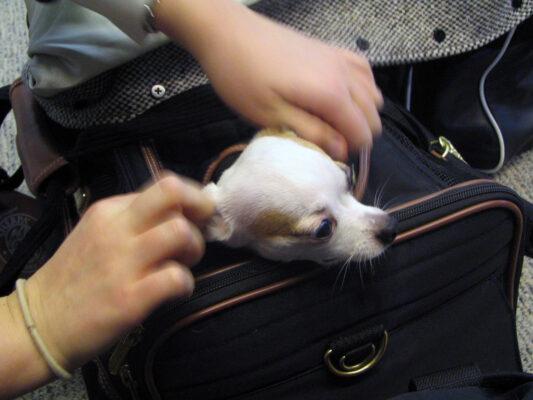 Fliegen mit Hund Koffer