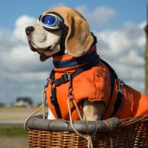 Drama an Bord: Hund stirbt in Flugzeug-Gepäckablage