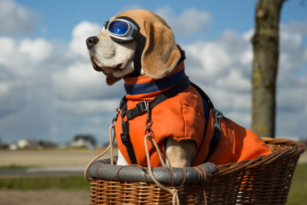 Fliegen mit Hund Pilot