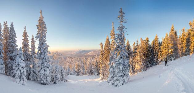Winterpanorama im Wald