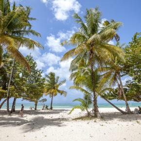 Unglaublich günstig in die Karibik: Hin- & Rückflüge nach Tobago nur 384€