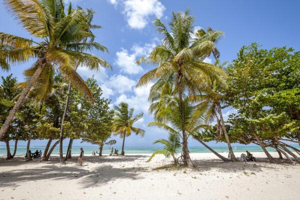 Tobago Strand Palmen