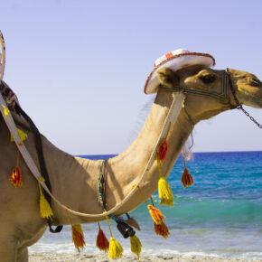Marokko: 7 Tage All Inclusive im TOP 5* Hotel mit Flug nur 379€