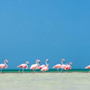 Mexiko: 9 Tage Playa del Carmen im TOP 4* RIU Hotel mit All Inclusive, Flug & Transfer nur 749€